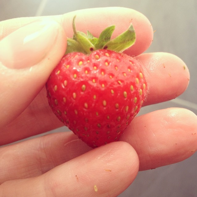 I don't think there is anything as amazing or as perfect as a strawberry.