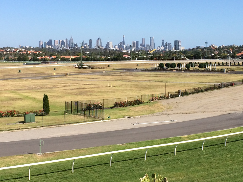 The Melbourne skyline from the home straight at Moonee Valley racecourse - an urban jungle beckoning to the intrepid city-birder.