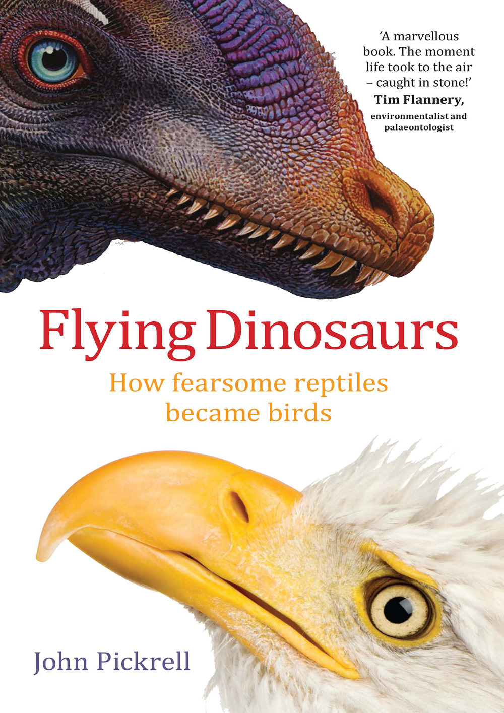 Flying Dinosaurs.jpg