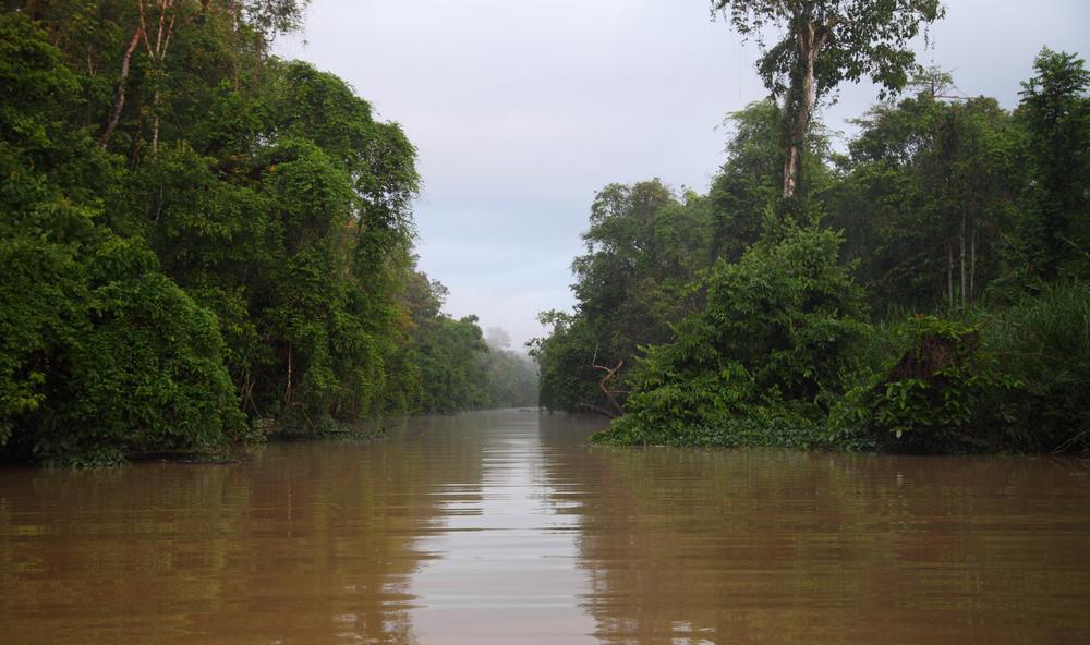 A minor tributary of the Kinabatangan.