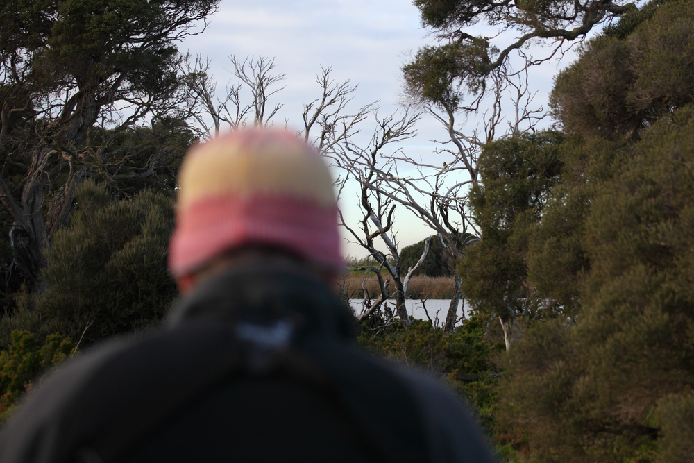 The Gang of Four at a distance in 2015 over the shoulder of Steve Davidson, a long-time leader of OBP winter surveys in Victoria.