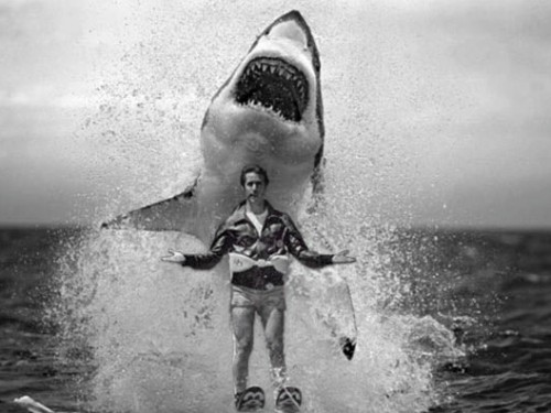 Sometimes you jump the shark... sometimes the shark jumps you.
