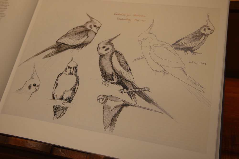 Cooper Parrots 04.jpg