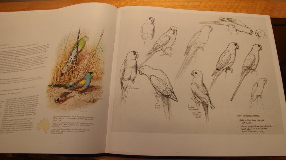 Cooper Parrots 08.jpg