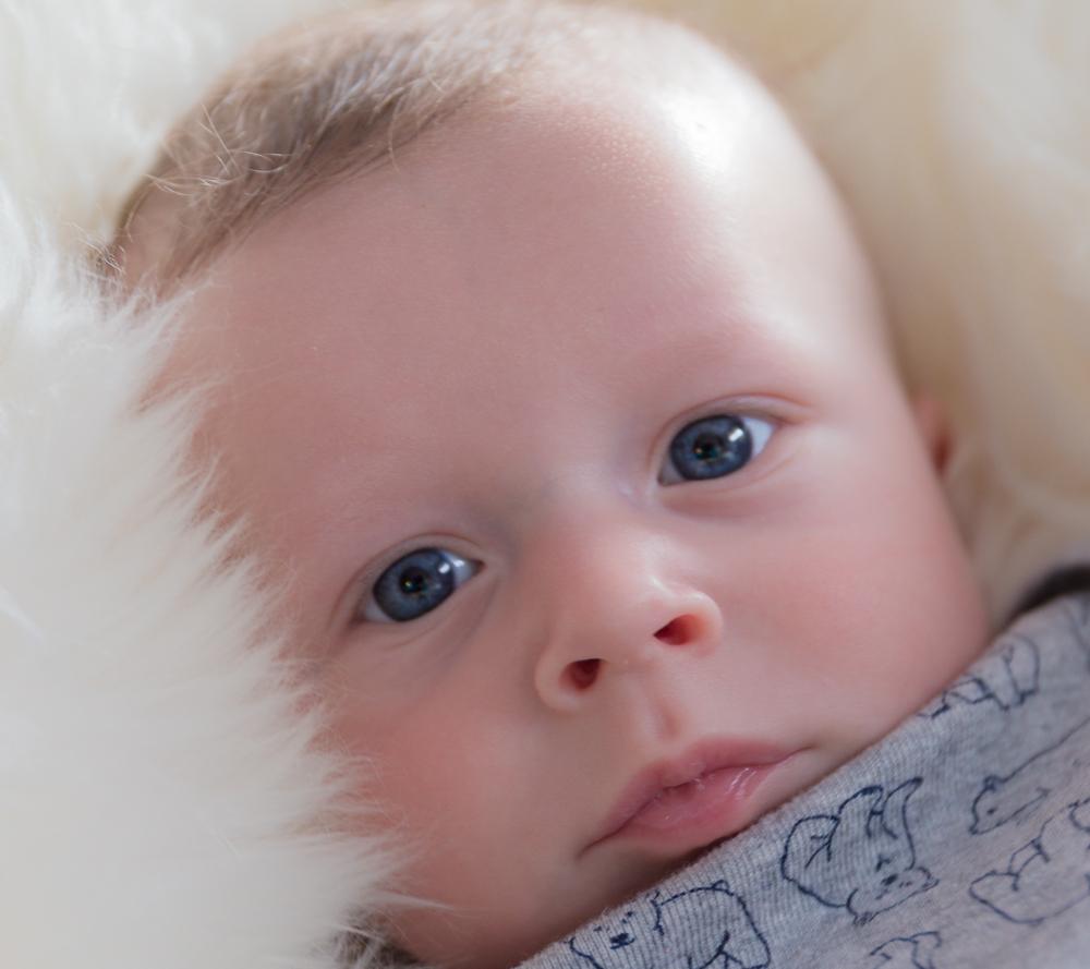 Baby Rye.jpg