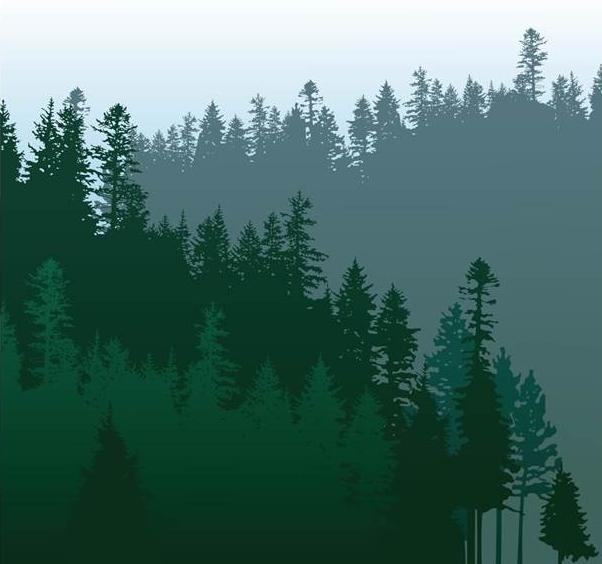 evergreen_090417.jpg