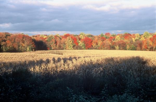 homestead pic3.jpg
