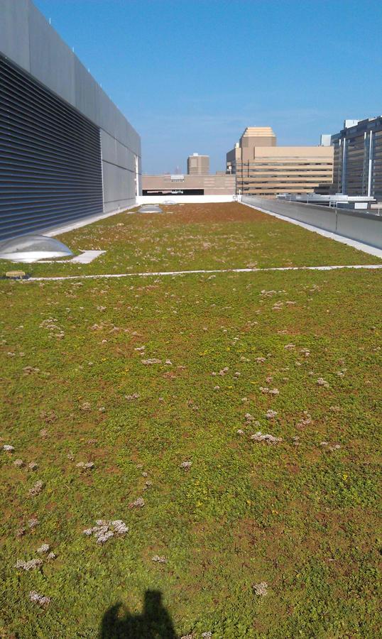 ccf ref lab green roof.jpg