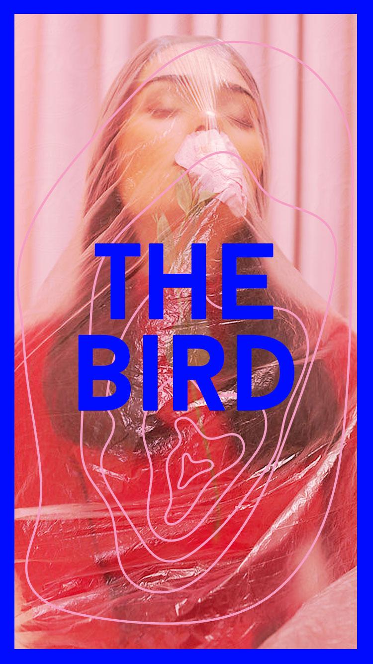 the-bird.jpg
