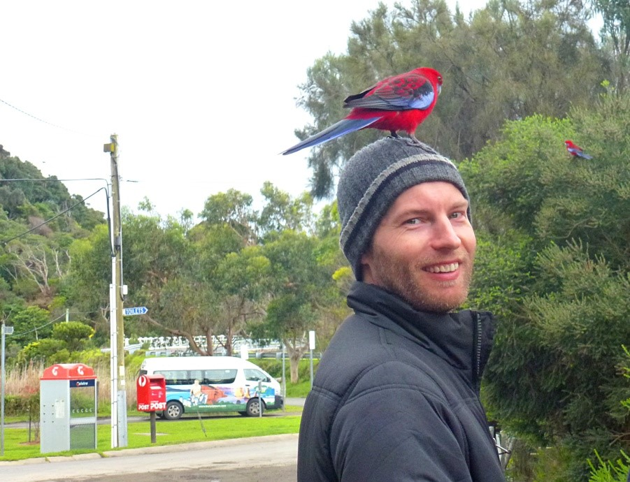 Visit from a Crimson Rosella