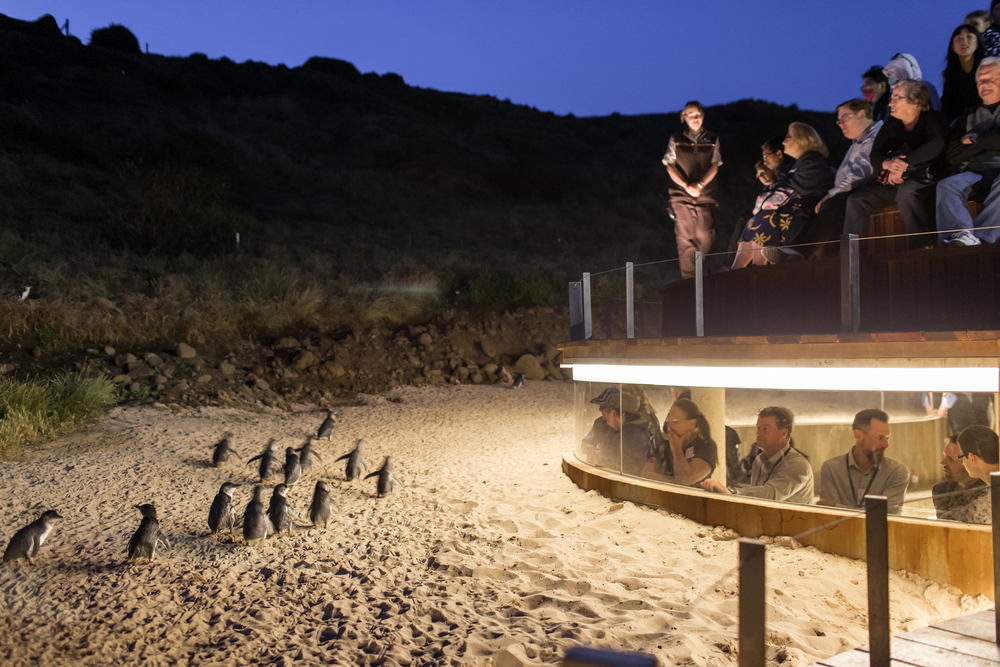 Penguin plus viewing in the evening