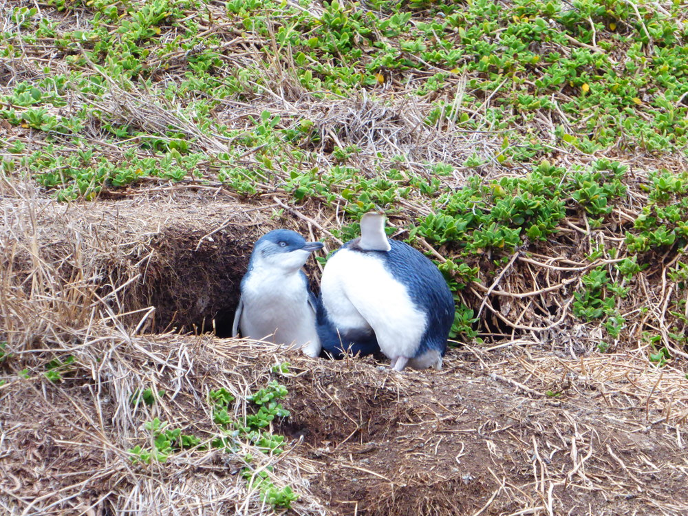 Penguin nest