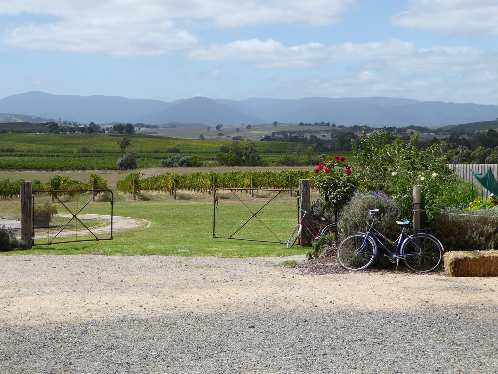 Yarra Valley Vineyards Tour