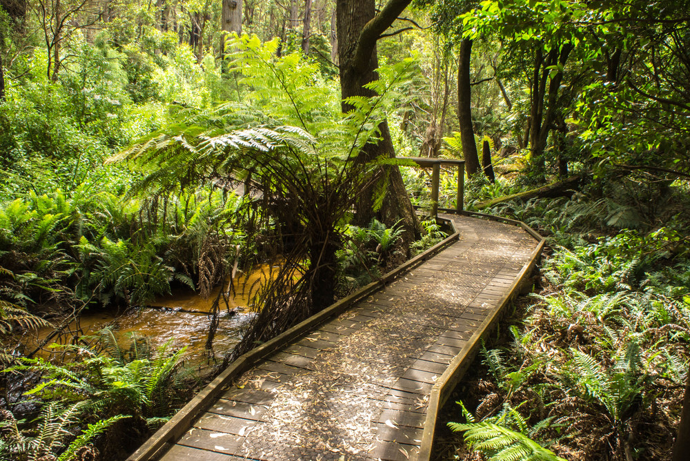 Copy of Wilsons Prom Rainforest Track