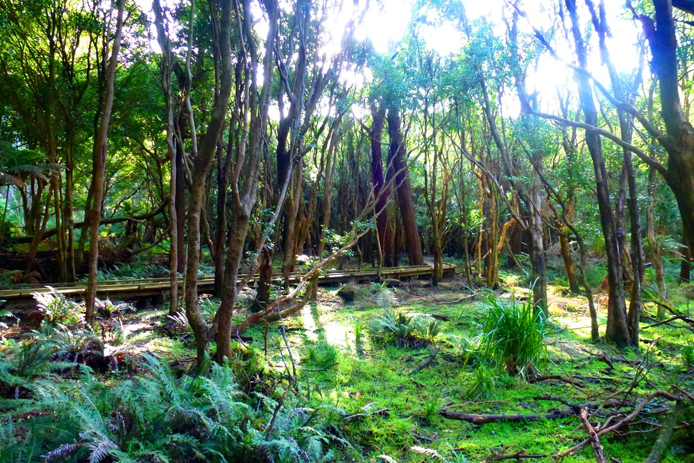 Copy of Wilsons Prom Rainforest