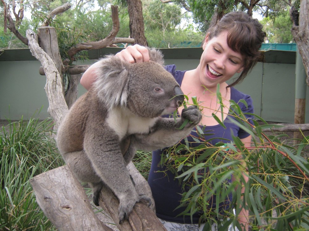 Bunyip Tours Close encounter with Koala1.jpg