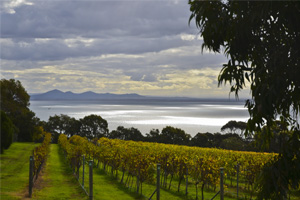 Bellarine Peninsula Wineries