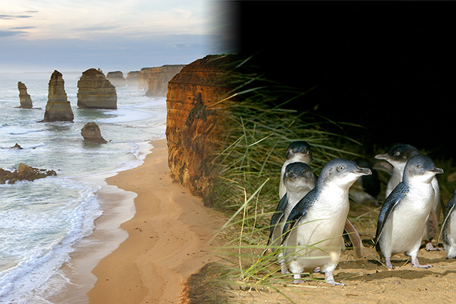 Great Ocean Road Phillip island Afternoon package