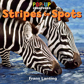 Stripes to Spots.jpg