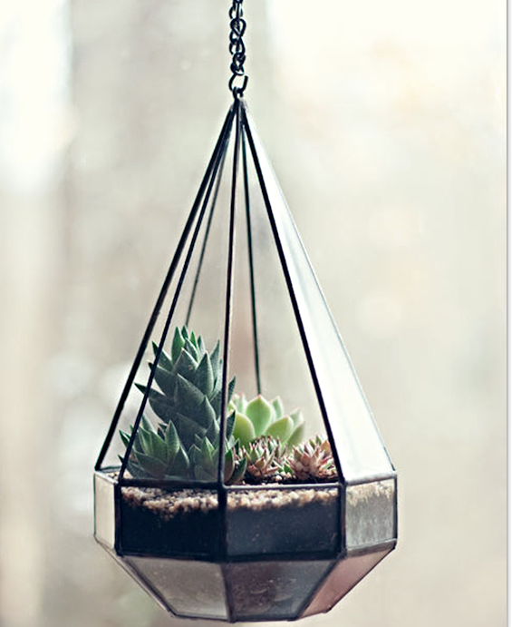 the perfect little terrarium