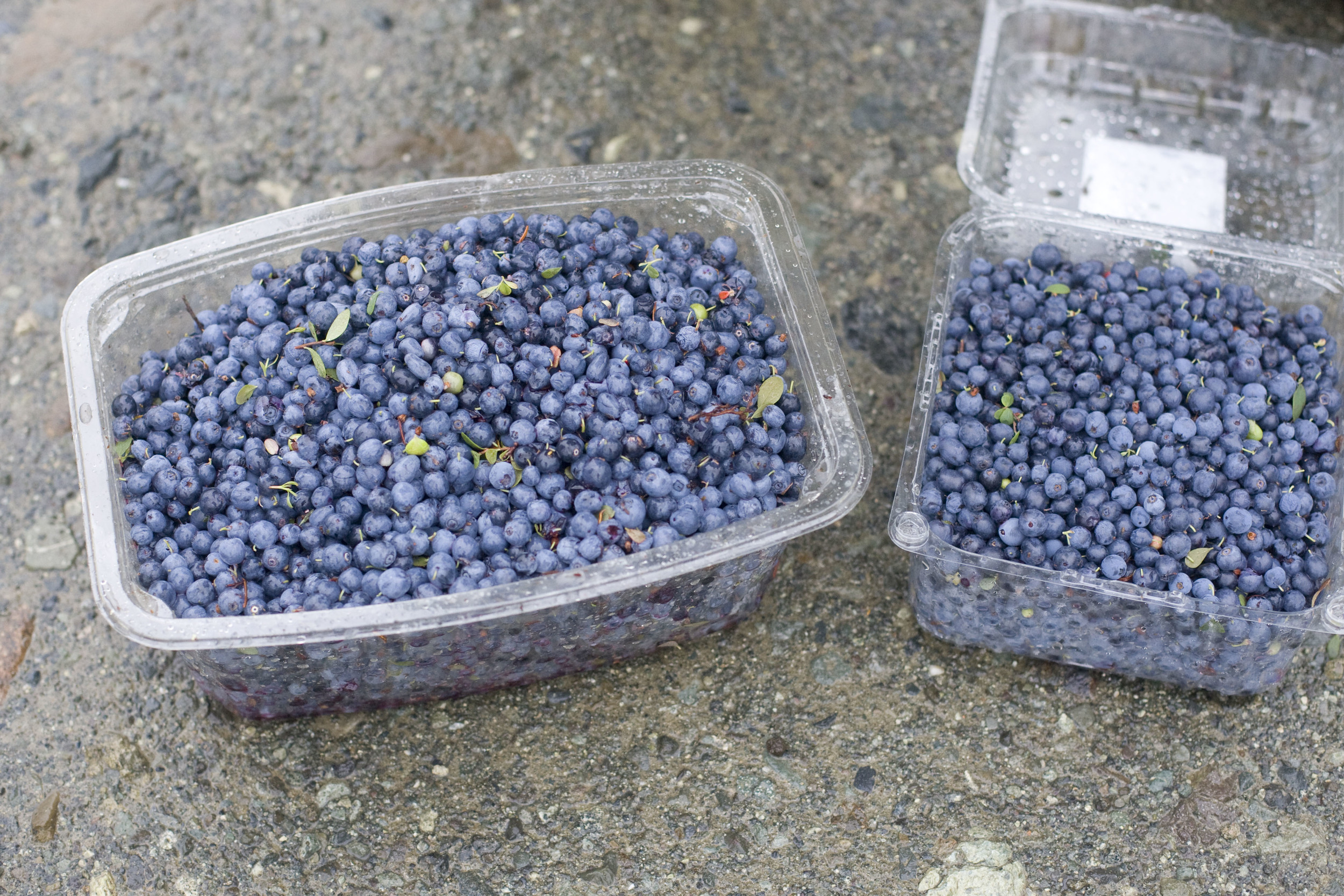 Produce On Parade - Blueberry Heaven