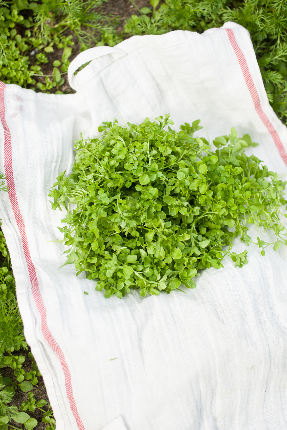 Produce On Parade - Chickweed Pesto