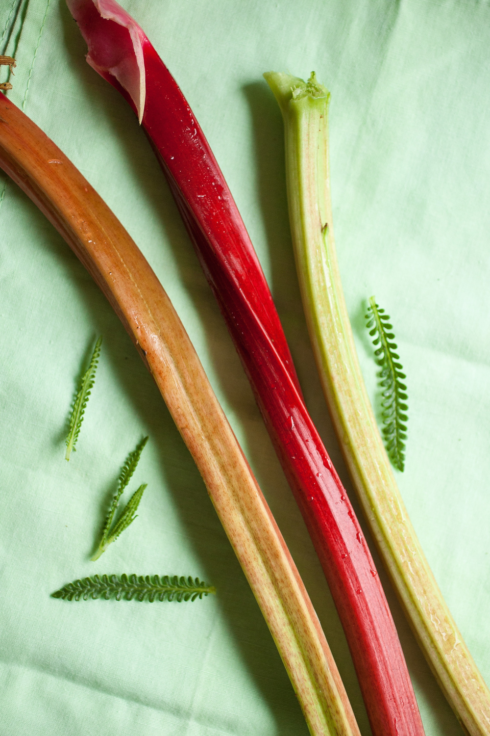 Produce On Parade - Lavender Rhubarb Shrub