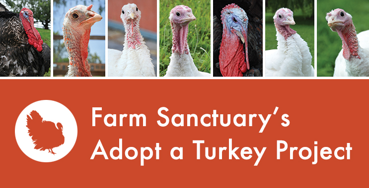Photo from farmsanctuary.com
