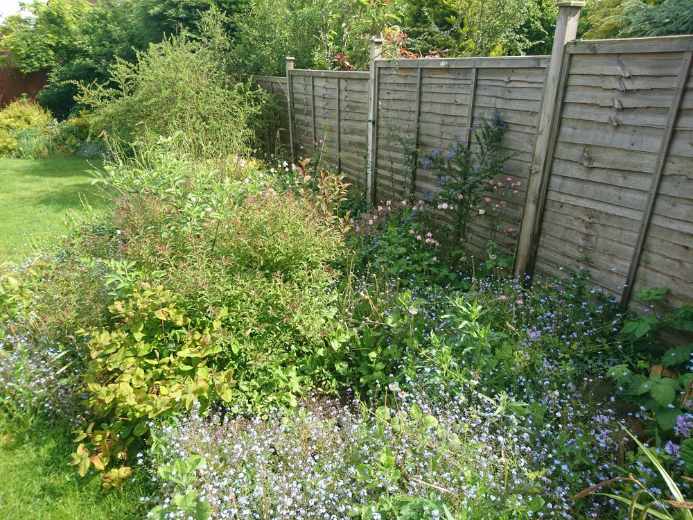 Overgrown border – Before