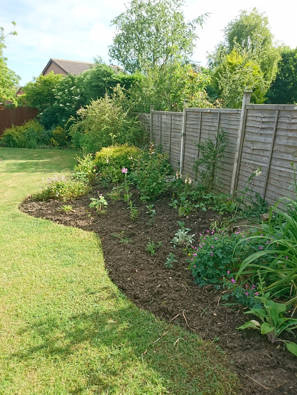 Overgrown and now dug and weeded border – After