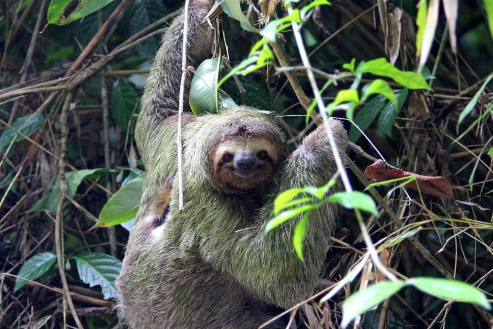 Toucan_Gardens_Villa_Costa_Rica_Wild_2..JPG