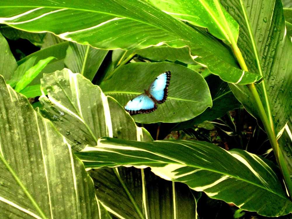 Toucan_Gardens_Villa_Costa_Rica_Wild_4.JPG