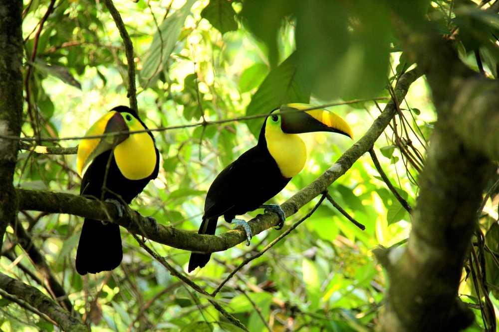 Toucan_Gardens_Villa_Costa_Rica_Wild_7.JPG