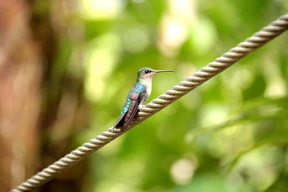 Toucan_Gardens_Villa_Costa_Rica_Wild_9.JPG