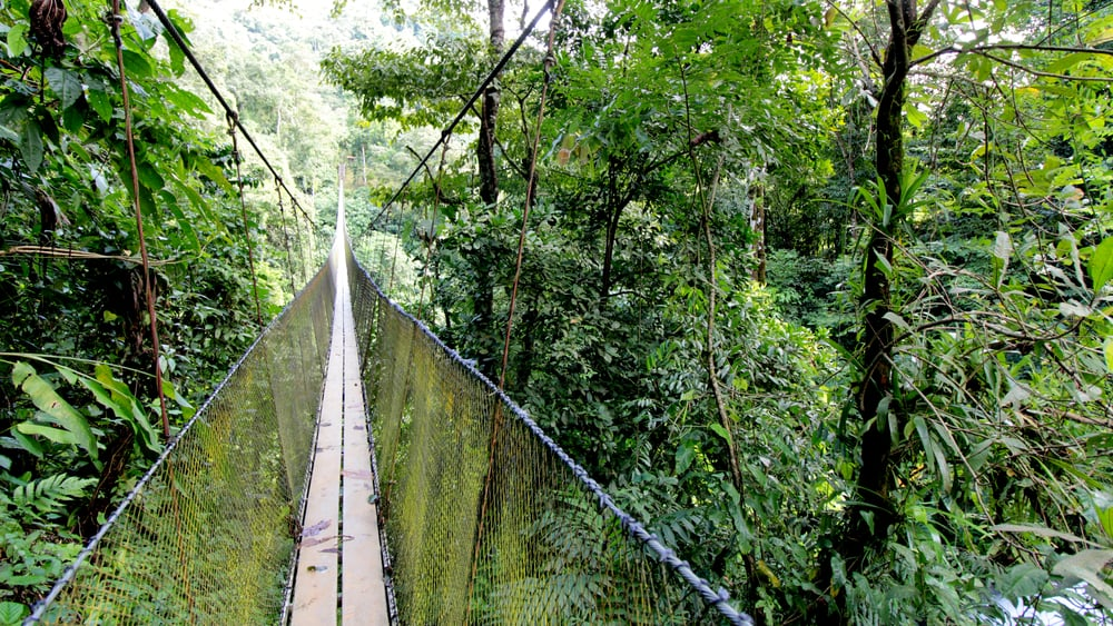 Toucan_Gardens_Villa_Suspension_Bridge.jpg