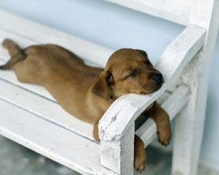 lovely+dog.jpg