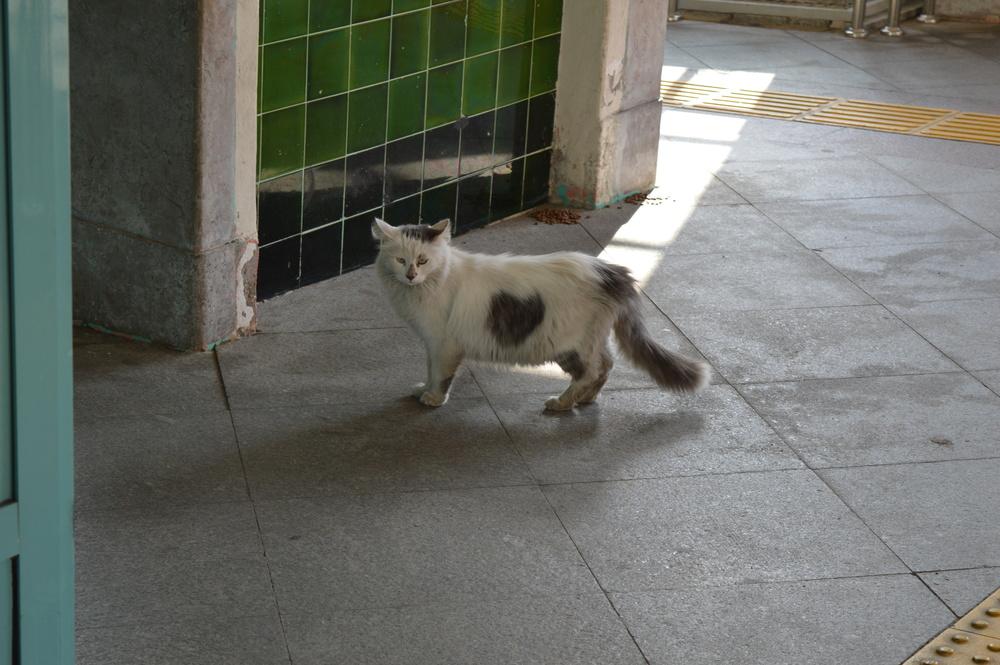 Loveheart cat.
