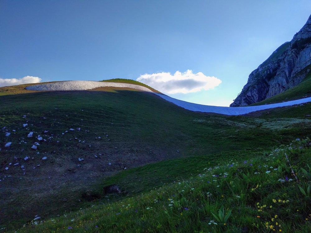 Snow and beautiful Alpine flowers.