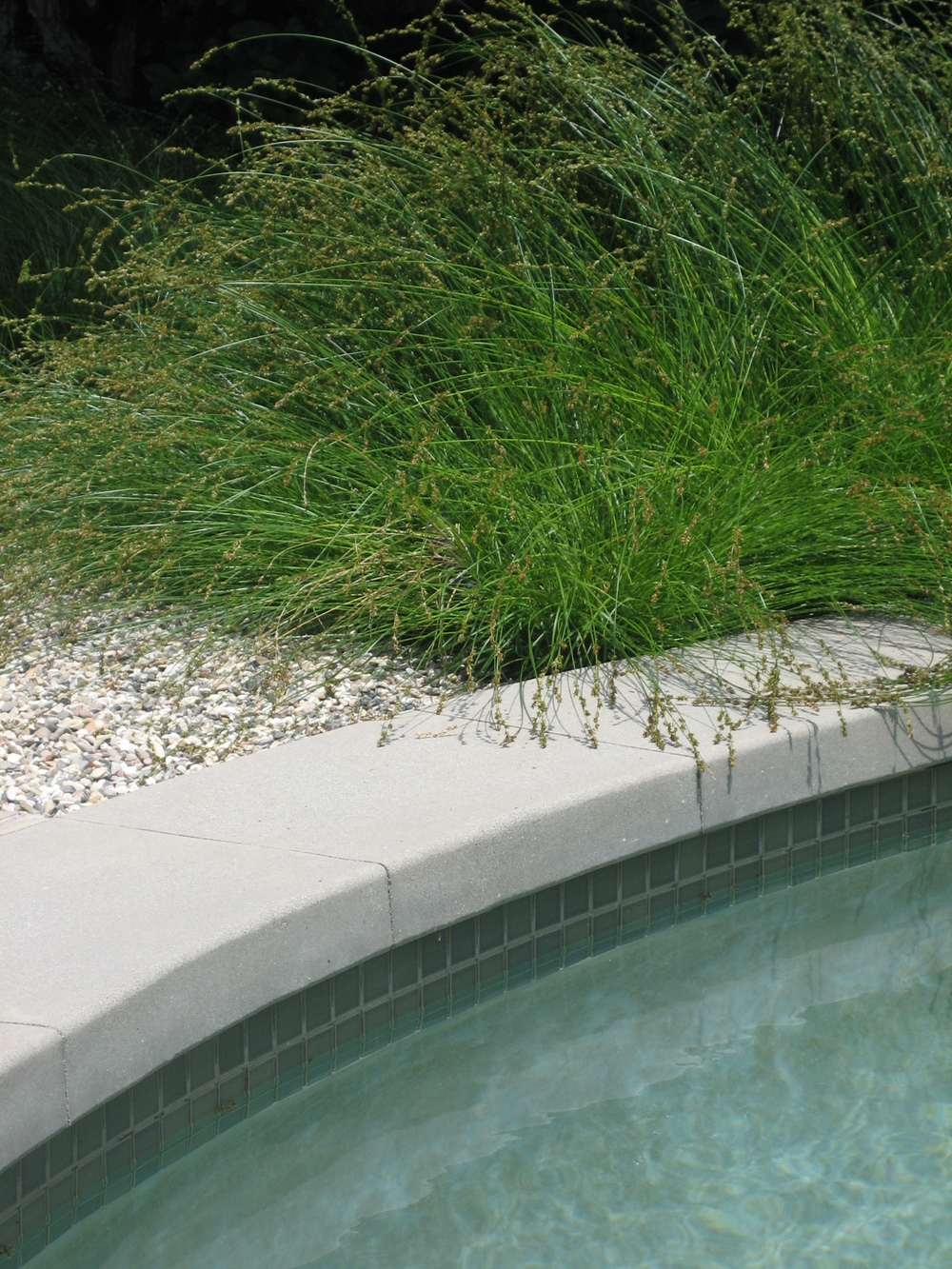 DD Sedge gravel concrete tile water.JPG