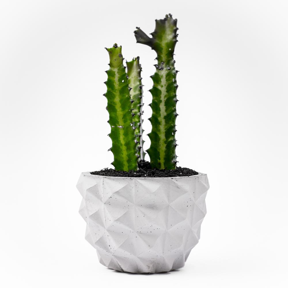 rumigami concrete planter
