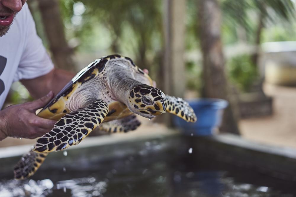 Diese Wasserschildkröte wurde am Strand gerettet, war leider in Plastikmüll gefangen und beinahe verhunger. Echt traurig was da für ein Müll im Meer schwimmt. Wir Menschen müssen uns echt schämen!