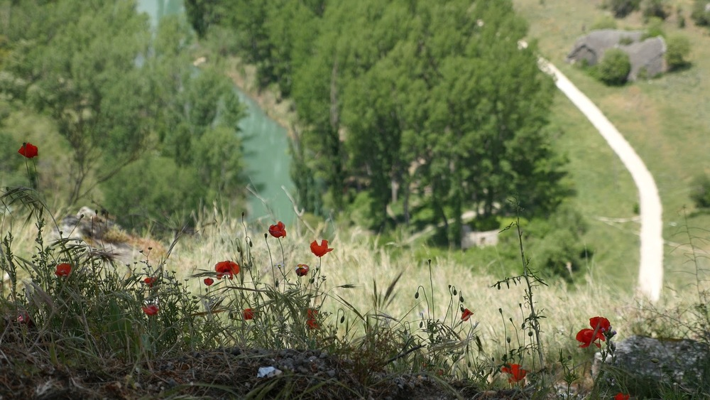 Spain Jucar River And Poppies Near Cuenca◹