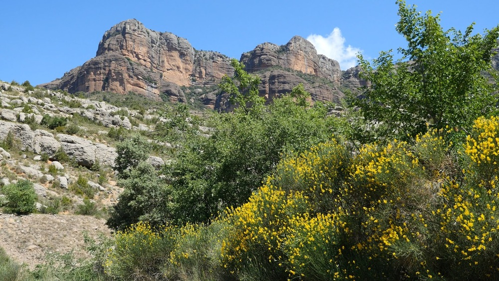 Spain Pyrenees Rocky Cliffs And Spanish Broom◹