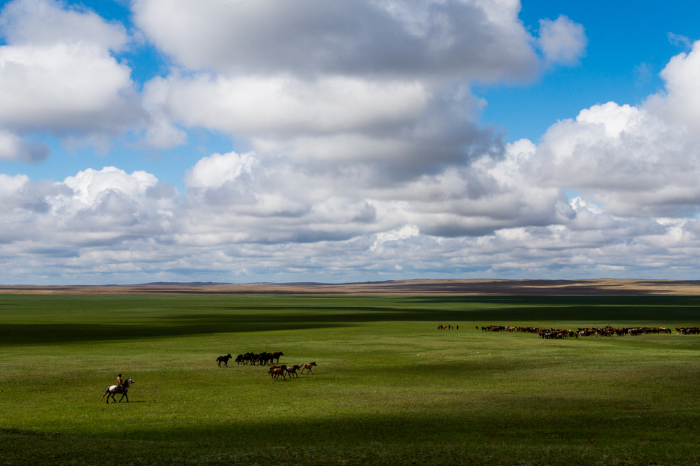 A cowboy herds a team of horses on the Kazakh Steppe.