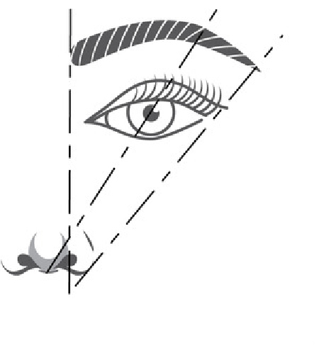 eyebrow shape placement.jpg