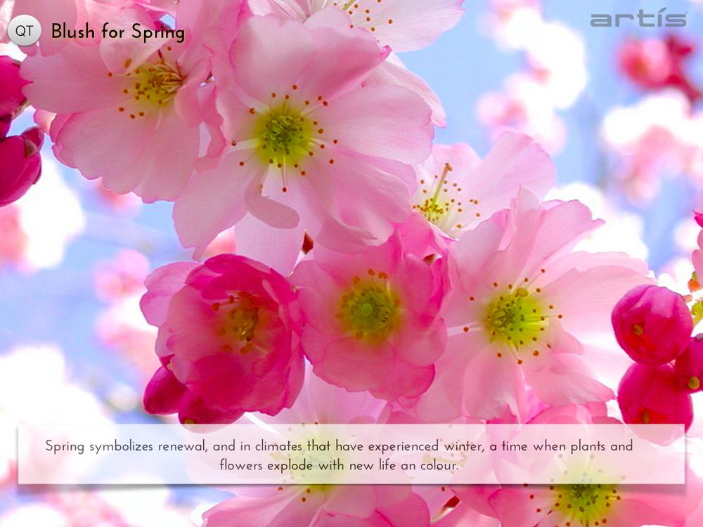 Blush for Spring.003.jpg