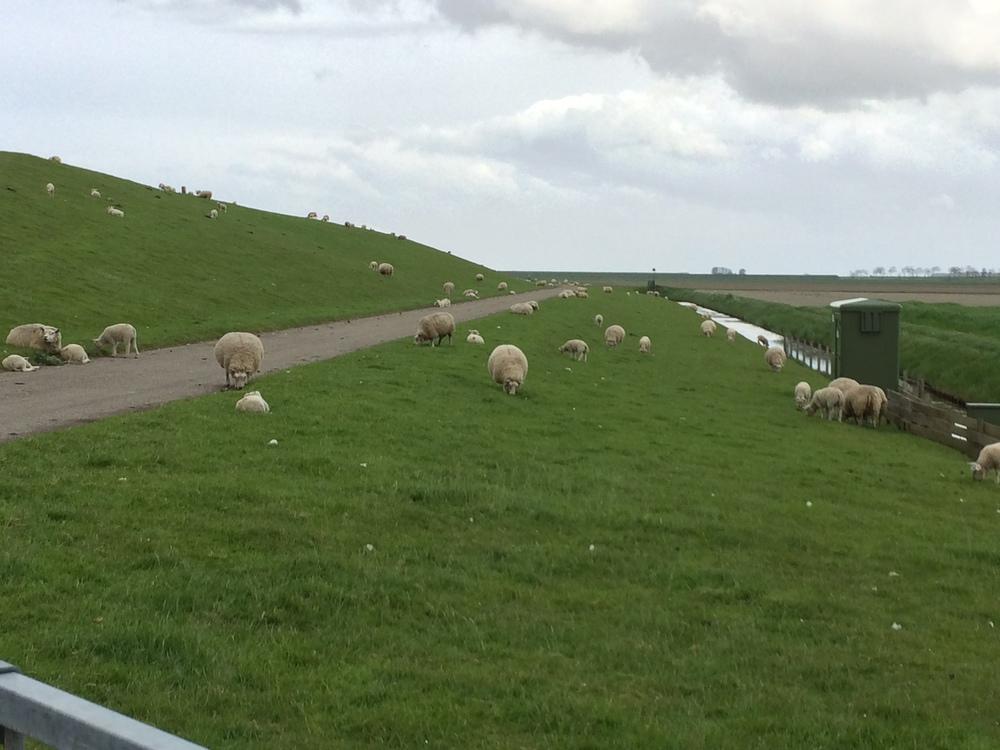 test_sheep.jpg