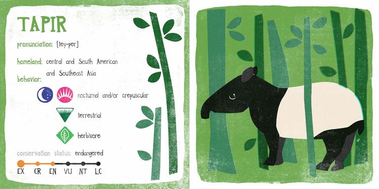 unusual-animals-tapir2.jpeg