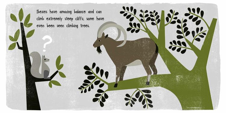 unusual-animals-ibex.jpeg