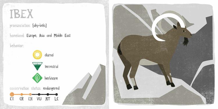 unusual-animals-ibex2.jpeg